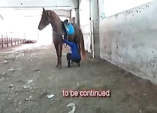 Marvelous brown horse in amazing zoophilia